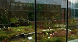 Insektivorenhaus.jpg
