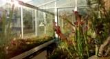 Insektivorenhaus2.jpg