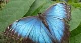190620 Schmetterling2.jpg