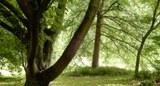 Wald Ost-USA.jpg