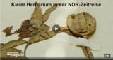 210808 Herbarium Zeitreise.jpg