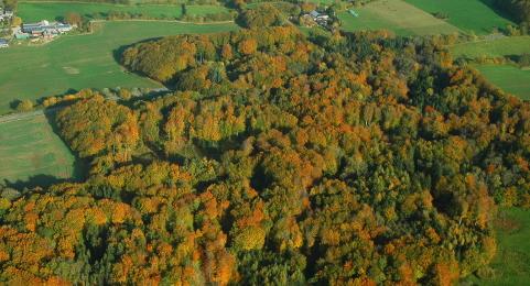 191103 Herbstfärbung.jpg