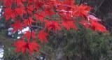 191103_herbstfärbung.jpg