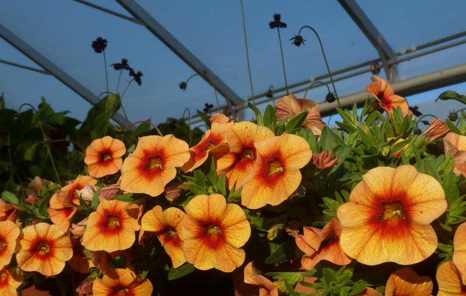 Die Anzuchtflächen im nichtöffentlichen Bereich des Botanischen Gartens