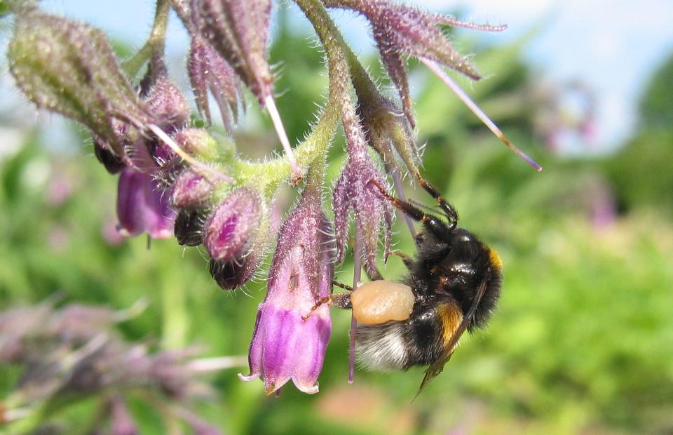 Informationen zum Gartenbereich Ökologie